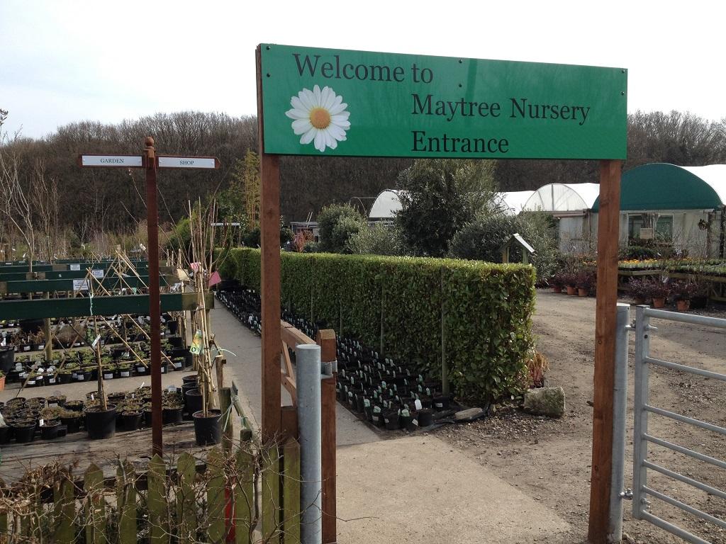 Maytree Nursery